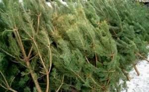 Купить елку в Казани