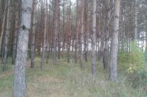 Следующий год в Татарстане объявлен Годом экологии