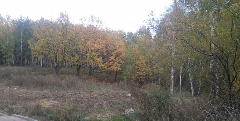 В Горкинско-Ометьевском лесу прохожие обнаружили тело молодого мужчины