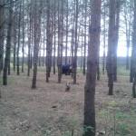 Ноксинский лес