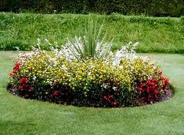 Клумба, цветы