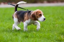 Сколько стоит завести собаку в Казани?