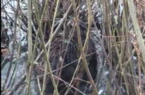 ВИДЕО: В Казани на озере Харовое появились бобры