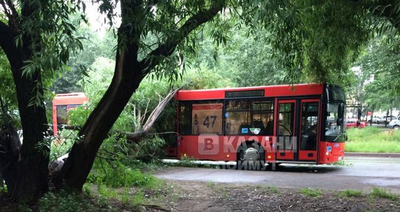 В Казани дерево рухнуло на автобус