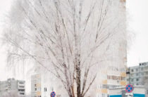 В Казани 29 января ожидается 8-10 градусов ниже нуля, на дорогах гололед