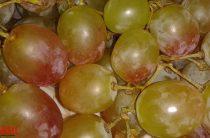 Лучшие виноградари представят свою продукцию в Казани