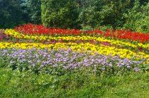 Казань вошла в тройку самых цветочных городов России