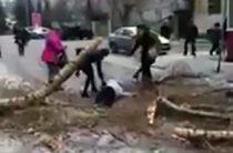 ВИДЕО: В Казани прямо на человека упало дерево