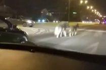 Соцсети: В Казани по проезжей части бегают потерявшиеся пони