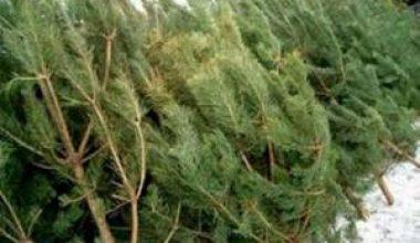 Пункт утилизации новогодних елок открылся в Казани