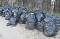 В Ноксинском лесу пройдет «классическая уборка»