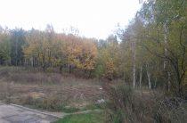 В Казани пройдет субботник в поселке Дербышки в рамках «Недели леса – 2017»